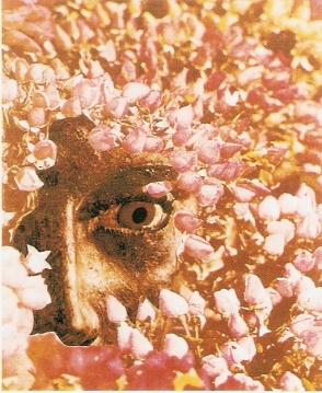 Προμετωπίδα του Οδυσσέα Ελύτη για τα Ρω του έρωτα 1972